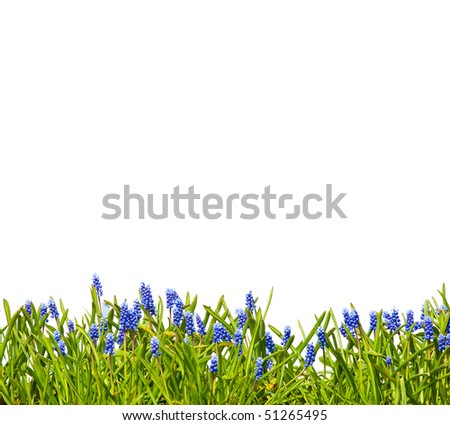Grass and flowers on isolated white background