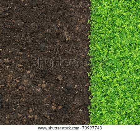 grass and green plants growing on soil manure.