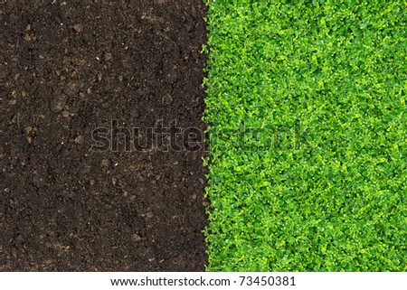 Grass And Green Plants Growing On Soil Manure Stock Photo 73450381 Shutterstock