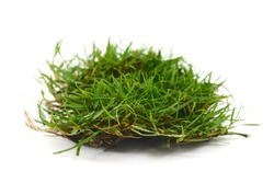 grass and roots isolated, golf divot