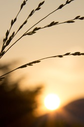 Grass and silhouette
