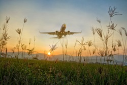 grass and sky nature with airport plane flower ground landscape and green field tree  iin  daylight sunshine spring, blue environment,vintage color tone