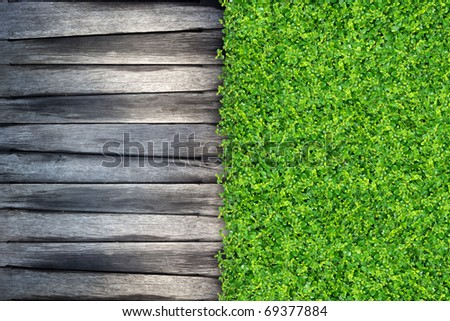 grass and Small green plants depend on old wood