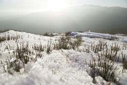Grass and snow in the mountains