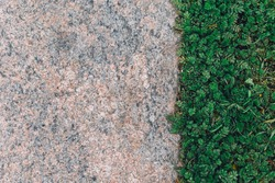 Grass and stone contrast. Textured natural contrast background. Ground detail abstract line