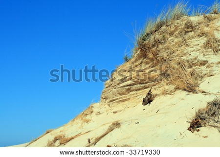 Grass and textured hill with grass in sand dunes at Leba - Poland