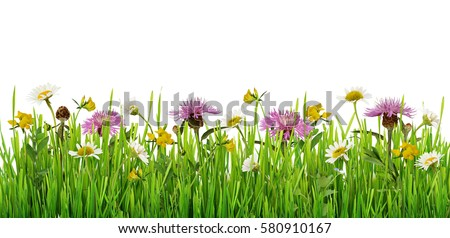 Grass and wild flowers border on white background