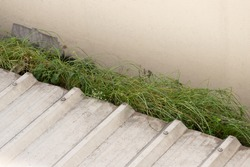 grass are growing on rain gutter of house roof. wild weed is blocking water in rain gutter.