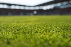 Grass at football stadium during sunny day