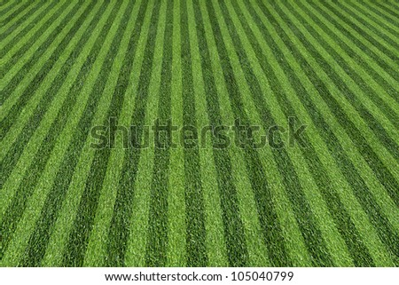grass at the ball field
