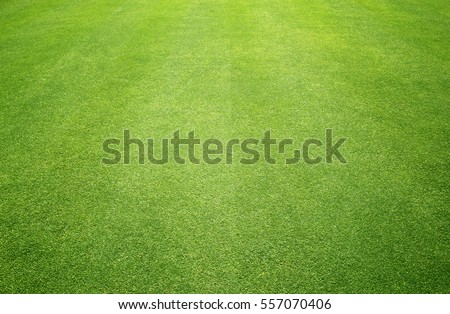 grass background Golf Courses green lawn pattern textured background. - Shutterstock ID 557070406