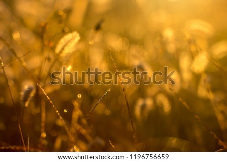 grass background light sunlight sunrise morning  #1196756659