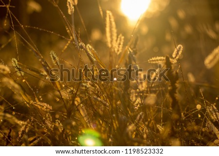 grass background light sunlight sunrise morning  #1198523332