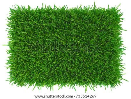 Grass background texture. fresh grass. 3d rendering