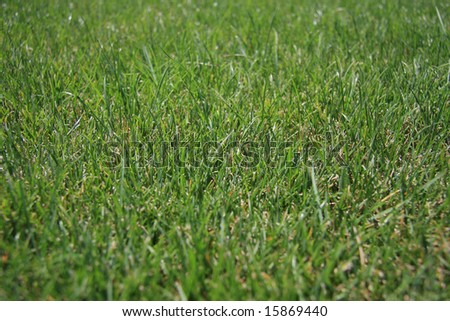 Grass background with selective focus at the center