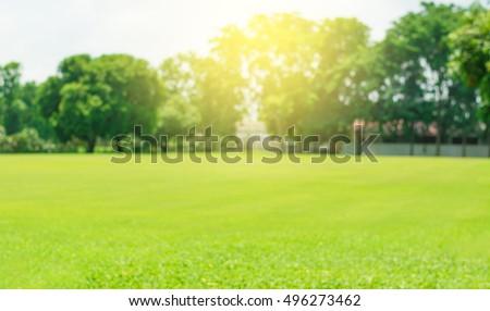 Grass blur and soft light - Shutterstock ID 496273462