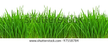 Grass border over white with copyspace