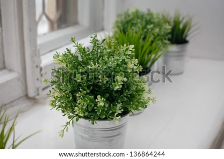 Grass bushes in a pot on windowstill