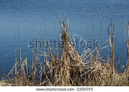 Grass by the side of the lake.