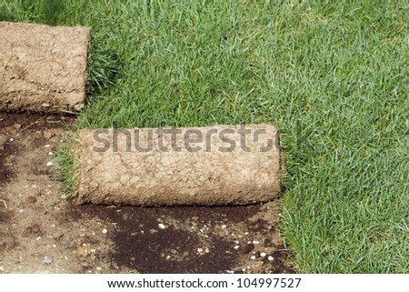 Grass Carpet Rolls Peeled from Soil