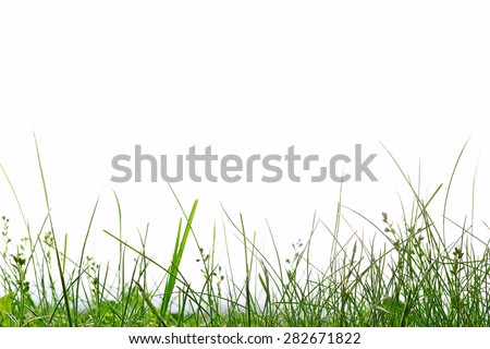 Grass close up on white background