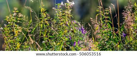 Grass Closeup With Sunbeams. Beautiful Nature Landscape. Gliczarów Górny, Poland. Zdjęcia stock ©