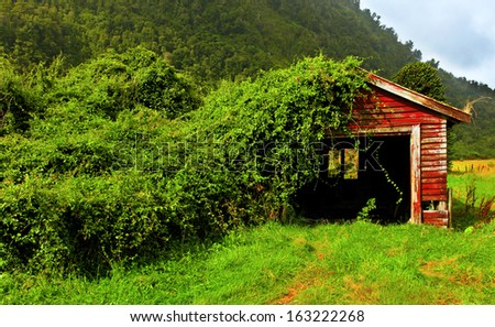 grass covered hut in new zealand