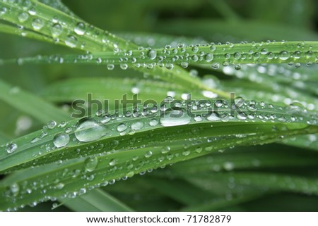 grass covered with hundreds of water drops