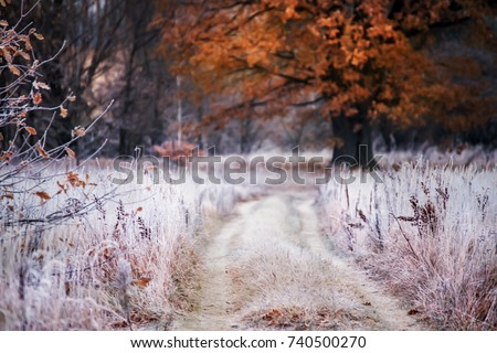 Grass covered with white frost in the early morning. The road running in the middle of the field and the oak tree with orange leaves. Transition from autumn to winter.Selective soft focus.