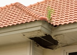Grass emerging from a pile of bird droppings on the roof. The transverse grooves roof when heavy rains caused the overflow out of the rut and into the attic, causing moldy ceiling.