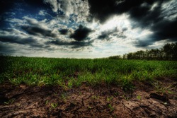 Grass field and the cloudscape - 20 megapixels