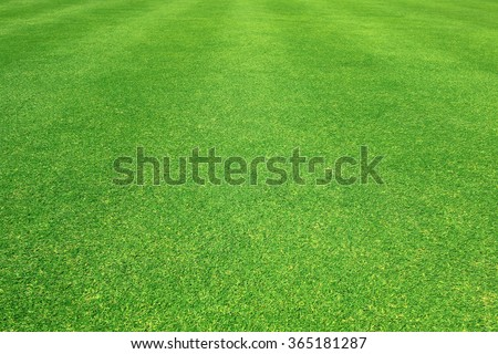 Grass field / Green grass background