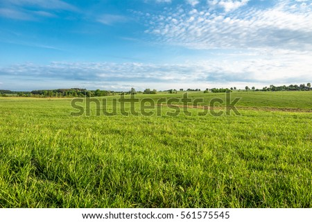 Grass field, green spring landscape #561575545