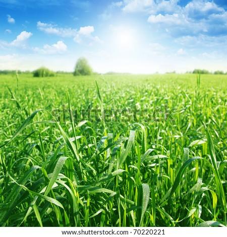Grass field in morning light.