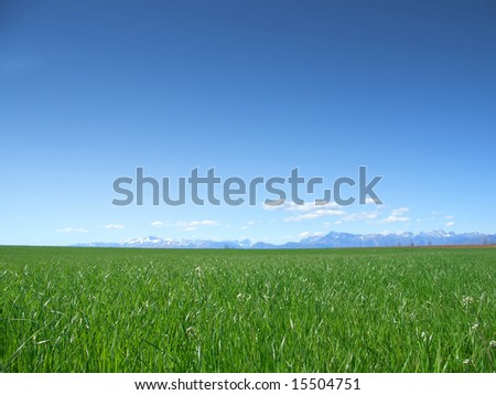 Grass field in spring under clear blue sky with mountains on the horizon
