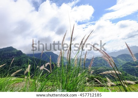 Grass field on sky and mountain background #457712185