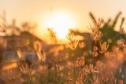 Grass field sunset Beautiful landscape with grasses meadow on sunlight. Countryside heaven amazing field scene grass meadow on sunbeam nature dawn. Sunset dawn landscape vibrant scenery horizontal