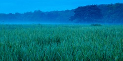 grass field with morning dew and fog