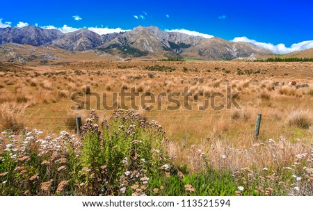 Grass field with rock and mountain background, Canterbury, New Zealnd