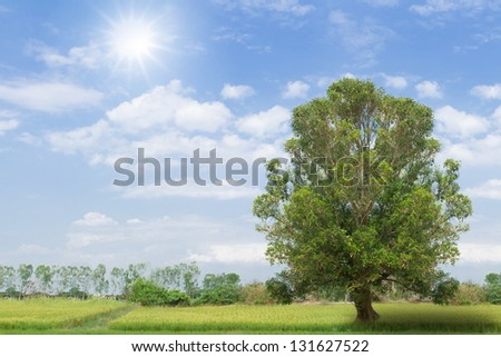 Grass fields with tree against a blue sky and sun