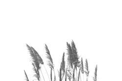 Grass flower Black and white minimal
