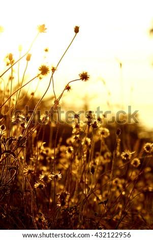 Grass flower field on light #432122956