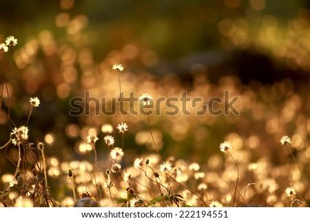 Grass flower field on sunlight #222194551
