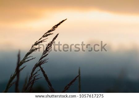 Grass flower in the morning, calm calm. #1057617275