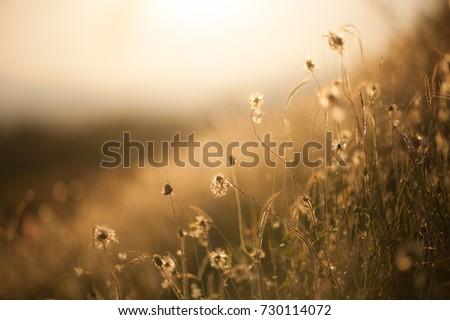 grass flower meadow close up