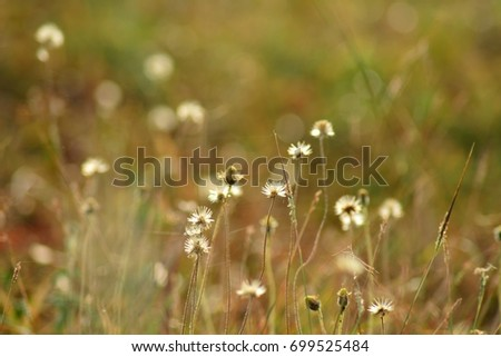 Grass flower on the mountain morning #699525484