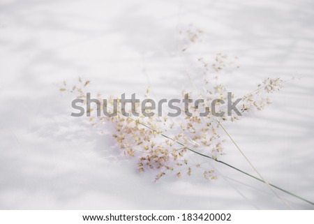 grass flower on white background , dream and love concept