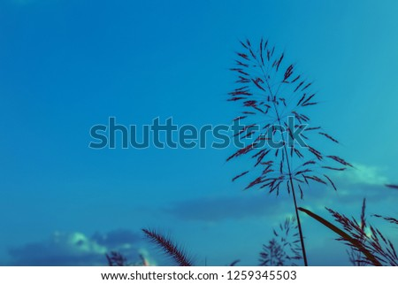 Grass flowers during the sunset. Shadow of plants with light in warm tone. Evening time on the hill. Soft focus in nature nackground.The image depicts loneliness without people.