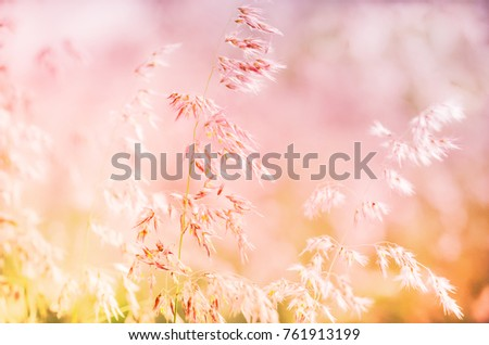 grass flowers soft blur in the pastel for background