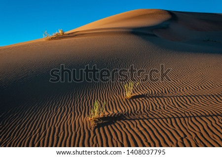 Grass forms focal points in this contrasty landscape of the Namib desert of Namibia. #1408037795